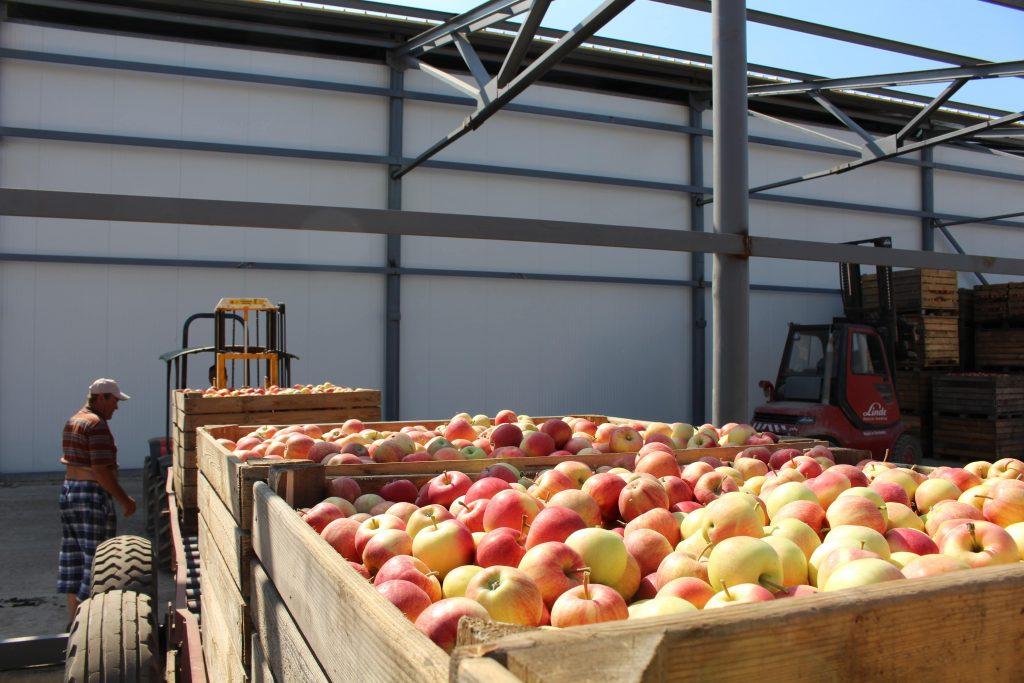 цены отзывы яблоки в Молдове
