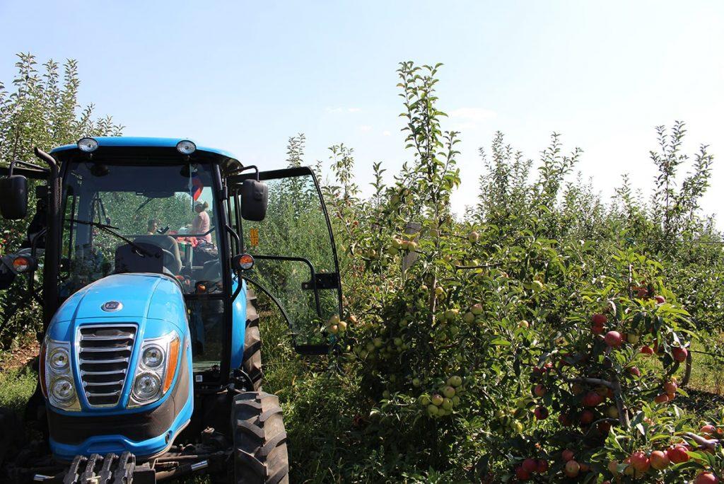 Vamilagro яблочные сады